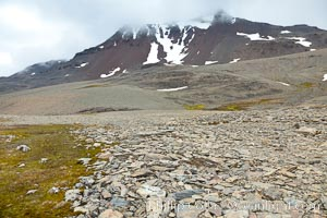 Shale covered rocky slope, near the pass over South Georgia Island between Fortuna Bay and Stromness Bay. South Georgia Island, natural history stock photograph, photo id 24590