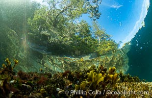 Shallow water reef with coniferous forest hanging over the water, Browning Pass, Vancouver Island. British Columbia, Canada, natural history stock photograph, photo id 35304