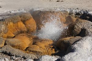 Shell Spring (Shell Geyser) erupts almost continuously.   The geysers opening resembles the two halves of a bivalve seashell, hence its name.  Biscuit Basin, Yellowstone National Park, Wyoming