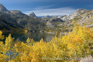 Aspen trees display Eastern Sierra fall colors, Lake Sabrina, Bishop Creek Canyon. Bishop Creek Canyon, Sierra Nevada Mountains, Bishop, California, USA, Populus tremuloides, natural history stock photograph, photo id 17546