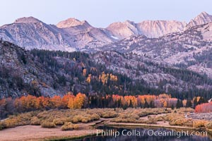 Sierra Nevada fall colors in soft predawn light, North Lake, Bishop Creek Canyon, Populus tremuloides, Bishop Creek Canyon, Sierra Nevada Mountains
