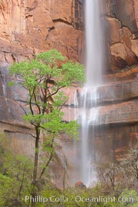 Waterfall at Temple of Sinawava during peak flow following spring rainstorm.  Zion Canyon. Temple of Sinawava, Zion National Park, Utah, USA, natural history stock photograph, photo id 12457