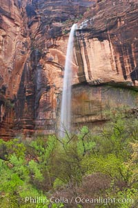 Ephemeral waterfall in Zion Canyon above Weeping Rock.  These falls last only a few hours following rain burst.  Zion Canyon. Zion National Park, Utah, USA, natural history stock photograph, photo id 12460