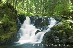 Image 13759, A small waterfall tumbles through old growth forest of douglas firs and hemlocks.  Sol Duc Springs. Sol Duc Springs, Olympic National Park, Washington, USA