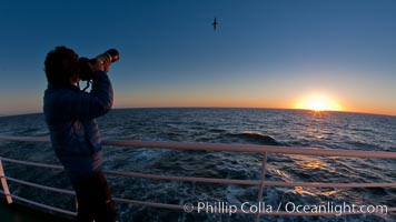 Photographing takes pictures of passing seabirds at sunset, from the deck of the M/V Polar Star