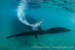 Southern right whale mother and calf underwater, Eubalaena australis, Argentina. Puerto Piramides, Chubut, Eubalaena australis, natural history stock photograph, photo id 35964