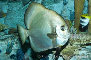 Unidentified fish., natural history stock photograph, photo id 11874