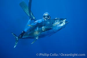 Joe Tobin and speared yellowfin tuna, Guadalupe Island (Isla Guadalupe)
