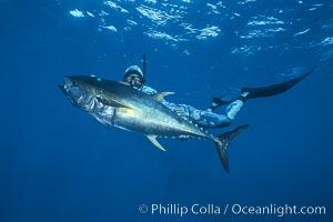 Joe Tobin and yellowfin tuna speared at Guadalupe Island. Guadalupe Island (Isla Guadalupe), Baja California, Mexico, natural history stock photograph, photo id 03719