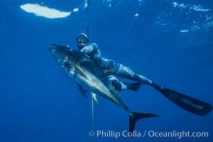 Spearfishing, Guadalupe Island, Mexico, Guadalupe Island (Isla Guadalupe)