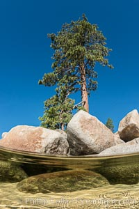 Split view of Trees and Underwater Boulders, Lake Tahoe, Nevada