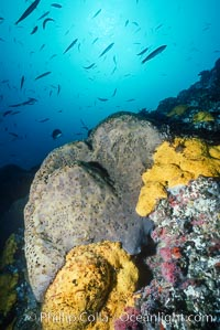 Sponges, Bens Rock