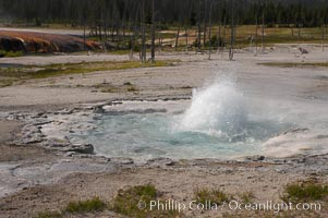 Spouter Geyser erupts a few feet high, lasting for several hours followed by quiet period of a few hours, Black Sand Basin, Yellowstone National Park, Wyoming