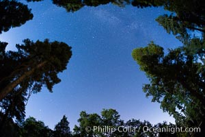 Stars and Trees, Milky Way, Palomar Mountain State Park