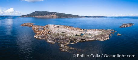 Steller Sea Lions atop Norris Rocks, Hornby Island in the distance, panoramic photo, Eumetopias jubatus