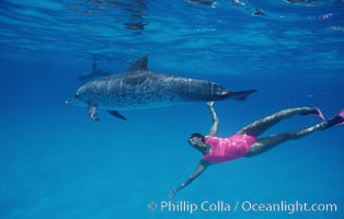 Atlantic spotted dolphin, Olympic swimmer Mikako Kotani. Bahamas, Stenella frontalis, natural history stock photograph, photo id 00645