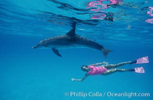 Atlantic spotted dolphin, Olympic swimmer Mikako Kotani, Stenella frontalis