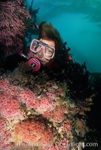 Anemone cluster and diver, Corynactis californica, Santa Cruz Island