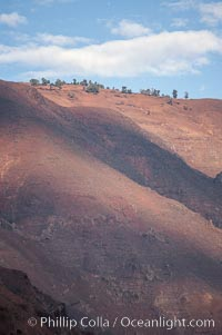Sparse trees along island crest catch moisture from clouds, Guadalupe Island (Isla Guadalupe)