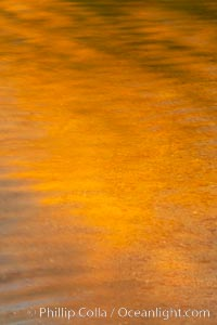 Orange aspen trees are reflected in the smooth calm water of North Lake. Bishop Creek Canyon, Sierra Nevada Mountains, California, USA, natural history stock photograph, photo id 23340