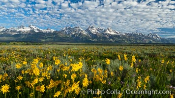 Teton Range and Antelope Flat wildflowers, sunrise, clouds, Grand Teton National Park, Wyoming