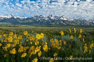 Teton Range and Antelope Flat wildflowers, sunrise, clouds. Grand Teton National Park, Wyoming, USA, natural history stock photograph, photo id 26937
