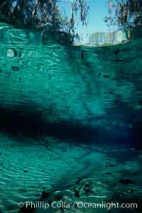 Three Sisters Springs. Crystal River, Florida, USA, natural history stock photograph, photo id 02670