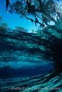 Three Sisters Springs. Three Sisters Springs, Crystal River, Florida, USA, natural history stock photograph, photo id 02674
