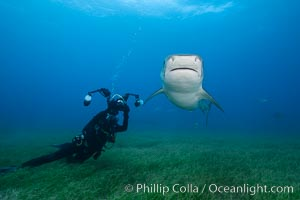 Image 31895, Tiger shark and underwater photographer. Bahamas, Galeocerdo cuvier