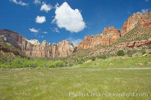 Towers of the Virgin, cottonwood trees. Spring, Zion National Park, Utah