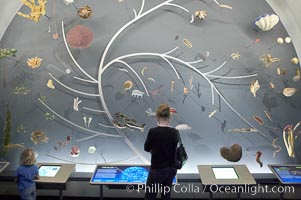 Visitors admire the Tree of Life display at the Milstein Hall of Ocean Life, American Museum of Natural History, New York City