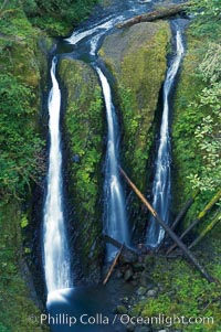Triple Falls, in the upper part of Oneonta Gorge, fall 130 feet through a lush, beautiful temperate rainforest. Triple Falls, Columbia River Gorge National Scenic Area, Oregon, USA, natural history stock photograph, photo id 19326