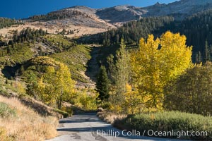 Aspens show fall colors in Mineral King Valley, part of Sequoia National Park in the southern Sierra Nevada, California. Mineral King, Sequoia National Park, California, USA, natural history stock photograph, photo id 32258