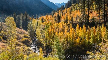 Aspens show fall colors in Mineral King Valley, part of Sequoia National Park in the southern Sierra Nevada, California. Mineral King, Sequoia National Park, California, USA, natural history stock photograph, photo id 32259