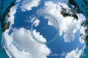 Underwater bubble ring, a stable toroidal pocket of air