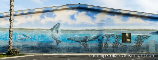 Underwater mural at Oceanside Pier. California, USA, natural history stock photograph, photo id 29122