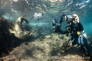 Underwater Photographer and California Sea Lions, Coronado Islands, Baja California, Mexico. Coronado Islands (Islas Coronado), Zalophus californianus, natural history stock photograph, photo id 36531
