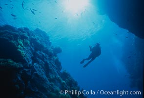 Underwater seascape, Church Rock, Guadalupe Island, Mexico. Guadalupe Island (Isla Guadalupe), Baja California, natural history stock photograph, photo id 36164