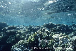 Various hard corals on coral reef, Northern Red Sea. Egyptian Red Sea, natural history stock photograph, photo id 05548
