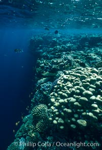Various hard corals on coral reef, Northern Red Sea. Egyptian Red Sea, natural history stock photograph, photo id 05549
