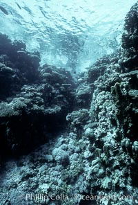 Various hard corals on coral reef, Northern Red Sea. Egyptian Red Sea, Egypt, natural history stock photograph, photo id 05551