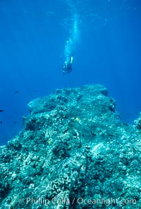 Various hard corals on coral reef, Maui