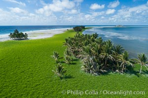 Vegetation and coconut palms at Clipperton Island, aerial photo. Clipperton Island is a spectacular coral atoll in the eastern Pacific. By permit HC / 1485 / CAB (France)