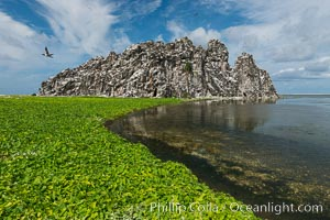 Vegetation on Clipperton Island. Clipperton Island, France, natural history stock photograph, photo id 33080