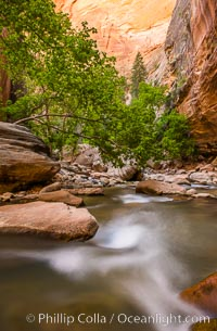 The Virgin River Narrows, where the Virgin River has carved deep, narrow canyons through the Zion National Park sandstone, creating one of the finest hikes in the world. Virgin River Narrows, Zion National Park, Utah, USA, natural history stock photograph, photo id 28577