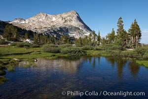 Vogelsang Peak (11516') in Yosemite's High Sierra, reflected in small pond, morning, summer, Yosemite National Park, California