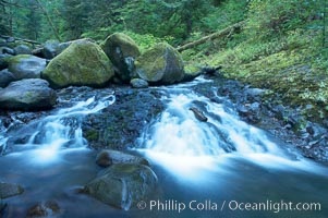 Water cascading through a temperate rainforest, near Triple Falls, Columbia River Gorge National Scenic Area, Oregon