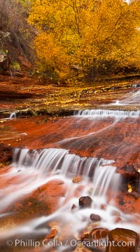 Small waterfalls and autumn trees, along the left fork in North Creek Canyon, with maple and cottonwood trees turning fall colors. Zion National Park, Utah, USA, natural history stock photograph, photo id 26099