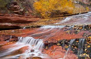 Small waterfalls and autumn trees, along the left fork in North Creek Canyon, with maple and cottonwood trees turning fall colors, Zion National Park, Utah