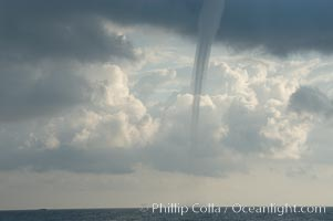 The mature vortex of a ocean waterspout, seen against cumulus clouds in the background.  Waterspouts are tornadoes that form over water, Great Isaac Island